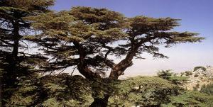 Libanon - Jordanien - Israel (- Palästina)