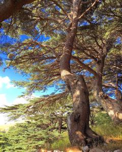 Libanon - Unterwegs im Land der Zedern
